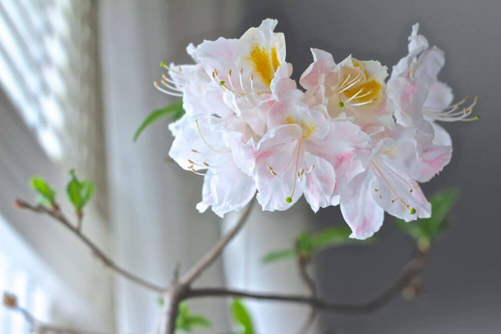 En bruten kvist i mars…