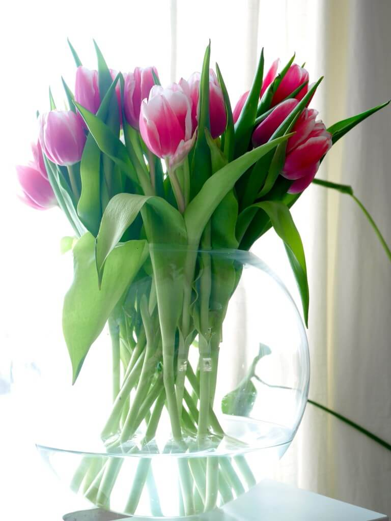 tulpanens dag rosa tulpaner klotvas