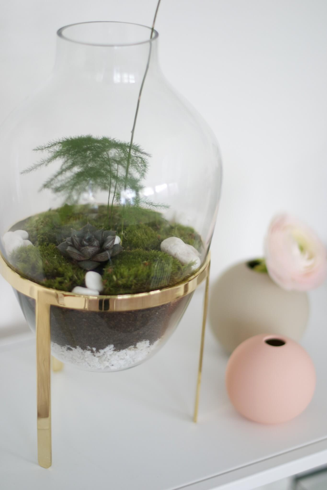 Växtterrarium