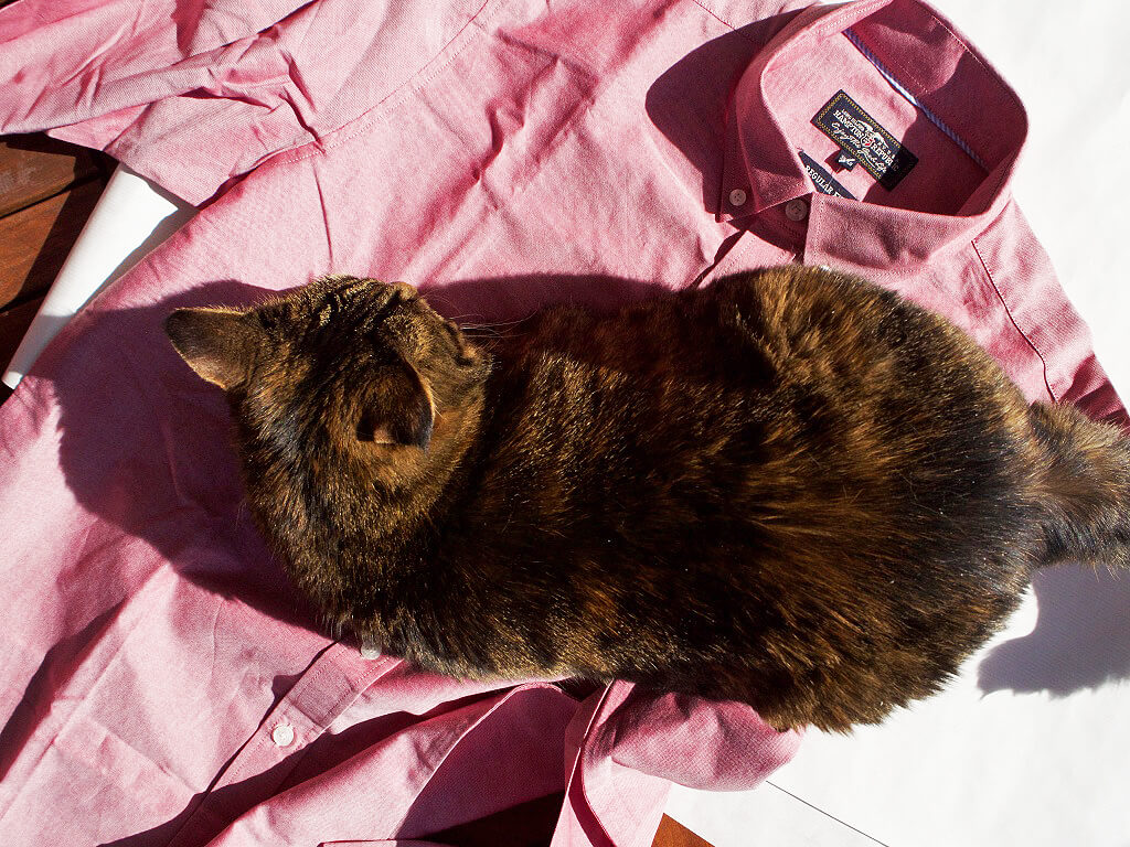 Katt + skjorta = sant